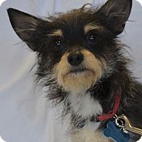 Adopt A Pet :: Jacob - Minneapolis, MN