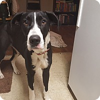 Adopt A Pet :: Paige - Broomfield, CO
