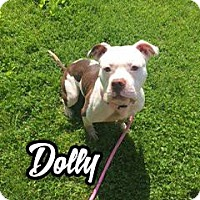 Adopt A Pet :: Dolly - Cary, IL