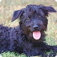 Adopt A Pet :: *Flossie - PENDING - Westport, CT
