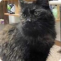 Adopt A Pet :: Suki - Norwich, NY