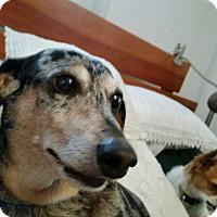 Adopt A Pet :: Solomon - Pinellas Park, FL