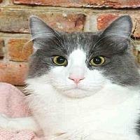 Adopt A Pet :: KENNY - Alameda, CA