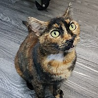 Adopt A Pet :: Ella - Port Coquitlam, BC