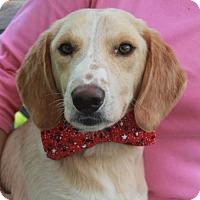 Adopt A Pet :: Kipper-PENDING - Garfield Heights, OH