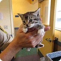 Adopt A Pet :: WILL TURNER - Lompoc, CA