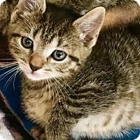 Adopt A Pet :: Peeka - Toms River, NJ
