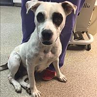 Adopt A Pet :: Courtesy: Spot - McCormick, SC