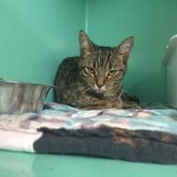 Adopt A Pet :: Nila - Belleville, ON