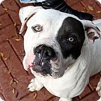 Adopt A Pet :: Humphrey - Los Angeles, CA