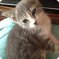Adopt A Pet :: Wesley - East Hanover, NJ