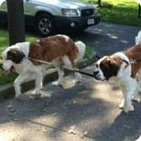 Adopt A Pet :: Ginger and Cooper - Marlton, NJ