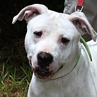 Adopt A Pet :: Dolly - Sylvania, GA