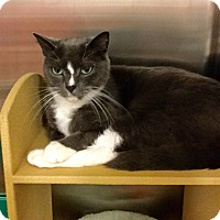 Adopt A Pet :: Lance - Colmar, PA