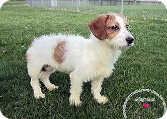Terrier (Unknown Type, Small) Mix Dog for adoption in Sidney, Ohio - Lexi