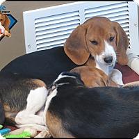 Adopt A Pet :: KC - Yardley, PA