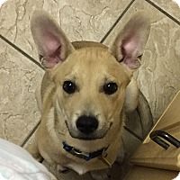 Adopt A Pet :: Rocko-Referral - Dripping Springs, TX