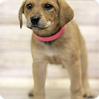Adopt A Pet :: Snorlax - Waldorf, MD