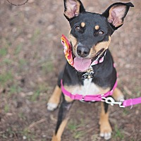 Doberman Pinscher Mix Dog for adoption in Kingwood, Texas - Heidi