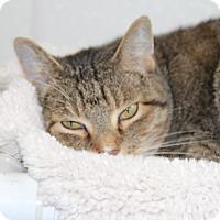 Adopt A Pet :: Shianne - Greensboro, NC