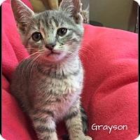 Adopt A Pet :: Grayson - Jasper, IN