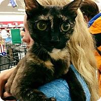 Adopt A Pet :: Toni - Mansfield, TX