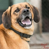 Adopt A Pet :: Tootles - Roanoke, VA