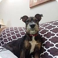 Adopt A Pet :: Mabel - New Oxford, PA