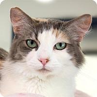 Adopt A Pet :: Fluffy - San Luis Obispo, CA