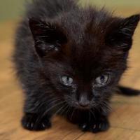 Adopt A Pet :: Wolfie - West Allis, WI