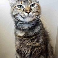 Adopt A Pet :: Meela - Oswego, IL