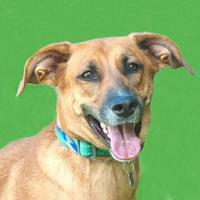 Adopt A Pet :: Delta *Trainee* - Ashland, VA