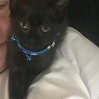 Adopt A Pet :: Jack - Media, PA
