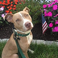 Adopt A Pet :: Maia - Mount Laurel, NJ