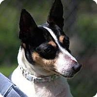 Adopt A Pet :: Daisy - Mt Gretna, PA
