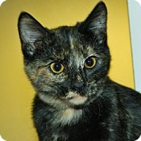 Adopt A Pet :: Elsie - Cheyenne, WY