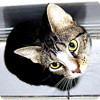 Adopt A Pet :: Marvelous Mathilda - New York, NY