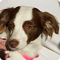 Adopt A Pet :: Katy - PENDING, in Maine - kennebunkport, ME