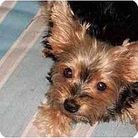 Adopt A Pet :: Sassy - Ocala, FL
