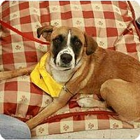 Adopt A Pet :: Dawson - Arlington, TX