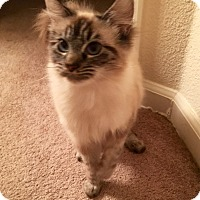 Adopt A Pet :: Flower - Lafayette, CA