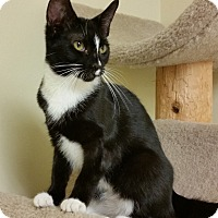 Adopt A Pet :: Diana - East Meadow, NY