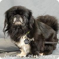 Adopt A Pet :: Luke - Tyler, TX