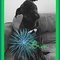 Adopt A Pet :: Bren - Friendswood, TX
