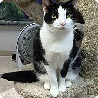 Adopt A Pet :: Lucille - Byron Center, MI
