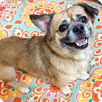 Adopt A Pet :: Shorty - Fennville, MI