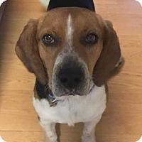 Adopt A Pet :: BAXTER - Ventnor City, NJ