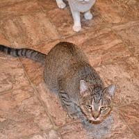 Adopt A Pet :: Rumple Camper - Cambridge, MD