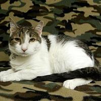 Adopt A Pet :: Mr. Green Jeans - Tyler, TX