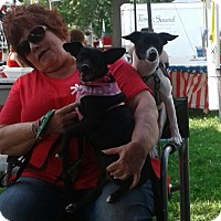 Adopt A Pet :: Barney & Betty - Rockford, IL
